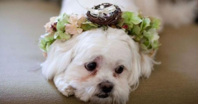 Can you imagine your dog wearing the wedding rings?
